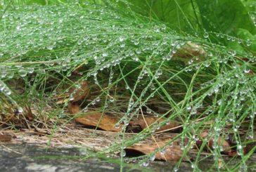 Verregnetes Wochenende auf den Kanaren angekündigt
