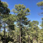 Naturschutzgebiet Tamadaba auf Gran Canaria