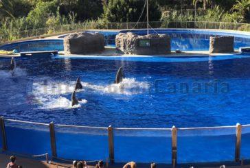 Wird das Delphinarium im Palmitos Park abgerissen?