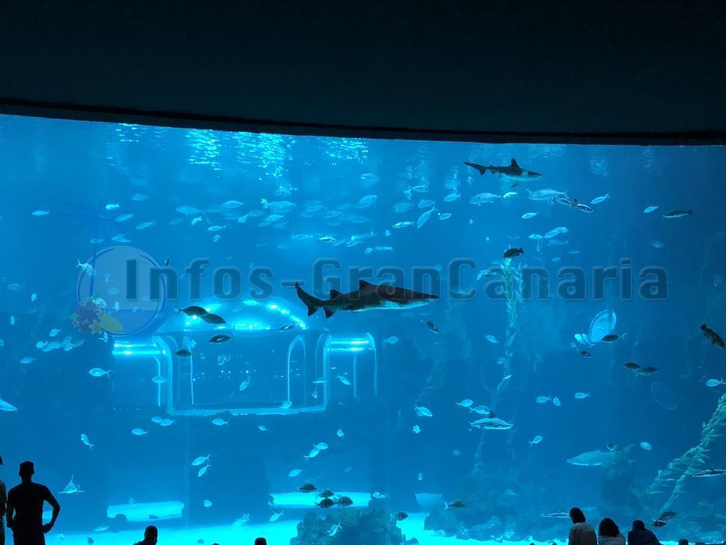 Gran Canaria Ausflug – Auf ins Aquarium Poema del Mar, es lohnt sich!