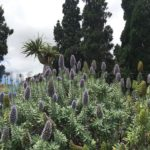 Jardin Canario bei Las Palmas