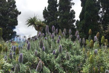 Gran Canaria Ausflug - Der Jardin Canario bei Las Palmas