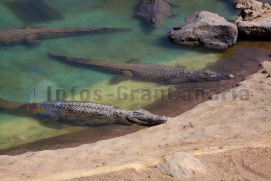 Krokodil Park Gran Canaria