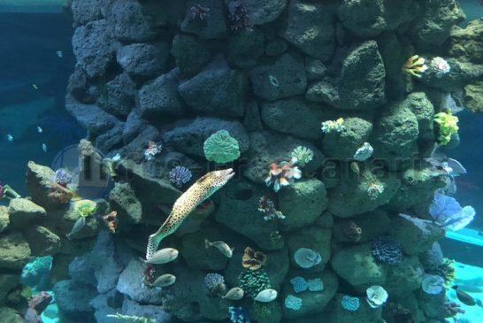 Poema del Mal Korallenriff