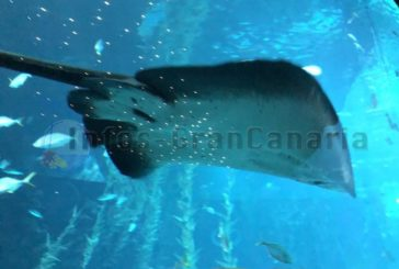 Das Aquarium Poema del Mar wird ab dem 1. Mai 2021 wieder geöffnet sein!