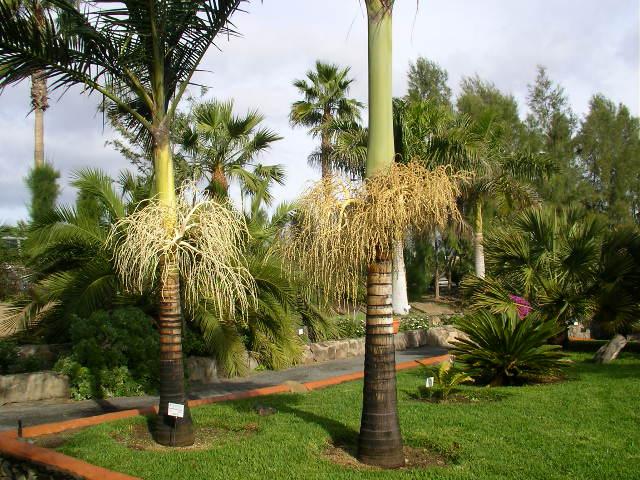 Parque Sur Maspalomas