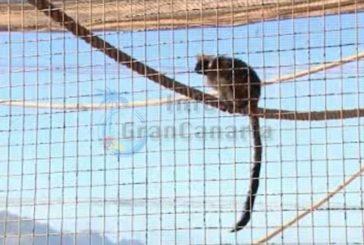 29 Tiere aus zoologischer Station entwendet