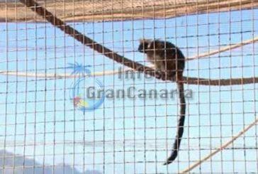1 Täter für den Raub von exotischen Tieren wurde verhaftet