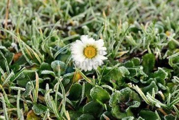 Frost auf Gran Canaria - Europa ist zu warm