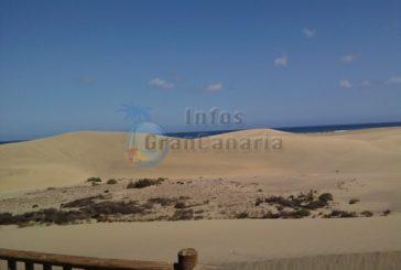 Canarios machen nur Tagesausflüge zum Strand