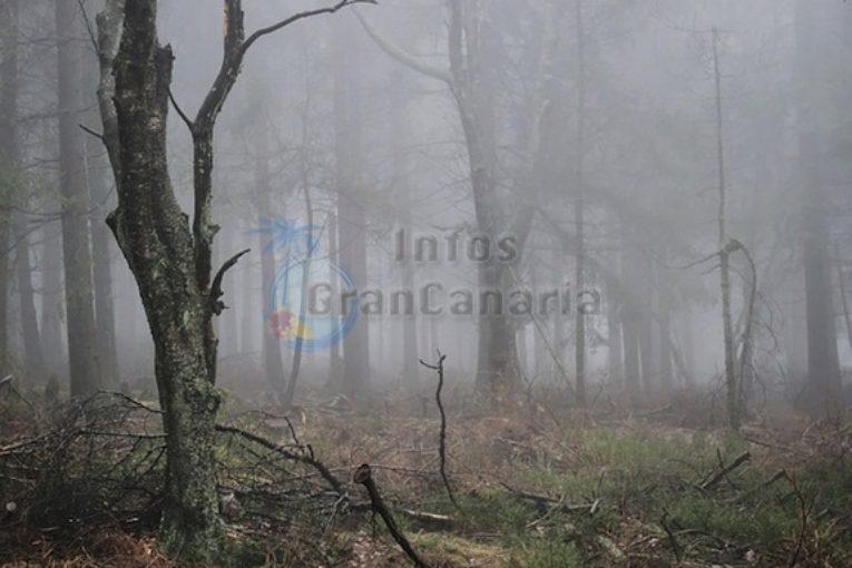 Wasser aus Nebelfeldern