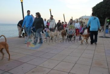 Hunde in Parks, am Strand und auf Spielplätzen bald verboten?