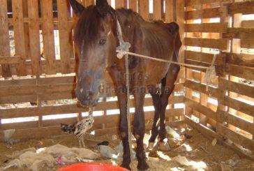 Abgemagerte Pferde - 2.800 Euro Strafe