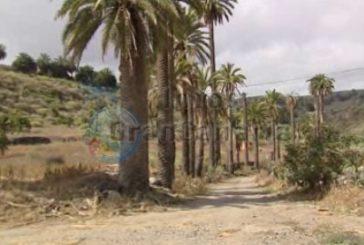Illegale Deponie für Tierkadaver in Arucas