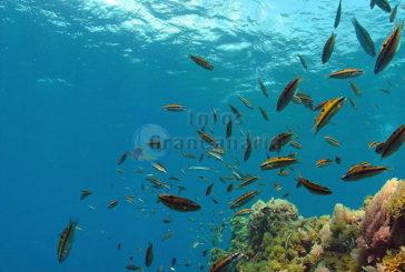 Höhere Wassertemperaturen, mehr Fische und mehr CO2 abbau