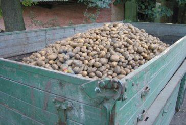 SPAR liefert zum 11. Mal in Folge Kartoffelsetzlinge an die Bauern auf Gran Canaria