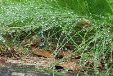 Der Mai war wieder besonders warm auf den Kanaren, Regen gab es bisher 26% zu wenig