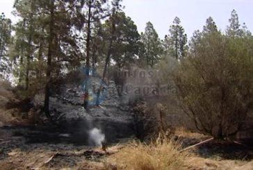 Sechs Waldbrände in 24 Stunden - Alle erfolgreich gelöscht