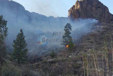 Waldbrand zwischen Soria und Las Niñas: Brandstifter festgenommen