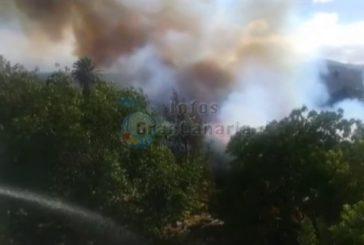 15.000 Quadratmeter im Parque de las Flores in Arucas verbrannt