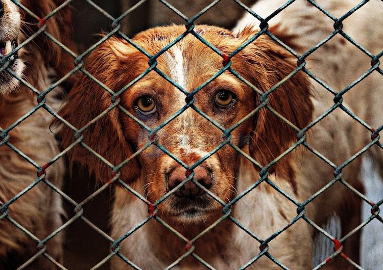 Trotzt Einschläferungen: Das Cabildo zieht positive Bilanz für Tierheime auf Gran Canaria im Jahr 2020