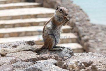 Forscher schlagen Alarm wegen invasiven Arten wie Schlangen und Atlashörnchen