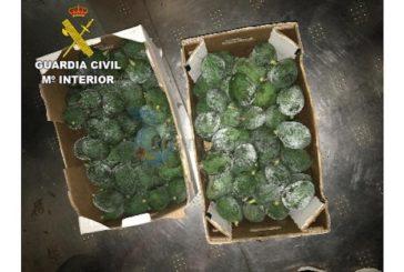 Raubserie von Avocado-Dieben aufgeklärt - 7 Festnahmen