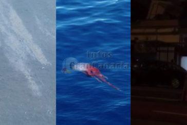 In Kurz: Ölfleck aufgelöst, seltsamer Kraken aufgetaucht & Terminator-Radar in Las Palmas