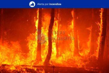 Waldbrandgefahr auf Gran Canaria als Extrem eingestuft - Höchstwerte Gestern bei 36,4°C