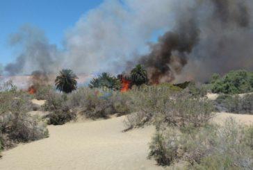 Feuer in den Dünen von Maspalomas augebrochen (Update 18:35h) - 2 Hektar Flora zerstört
