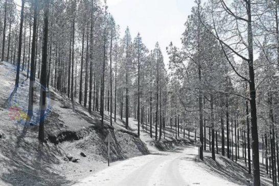 SEPRONA hat Ermittlungen zum Waldbrand im Sommer 2019 abgeschlossen - Verfahren gegen Heredad de Aguas de Arucas eröffnet