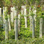 Privatinitiative will bei Wiederaufforstung auf Gran Canaria auch Schüler einbinden und 4.000 Bäume pflanzen