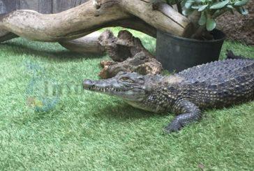 Notlage im Cocodrilo Park - Tiere kennen keine Kurzarbeit!