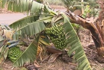 Sturm verursachte Schäden in Höhe von 7 Millionen € in der Landwirtschaft