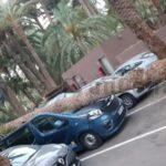 Sturm über Gran Canaria – Karneval ausgesetzt – Palmen umgeknickt – Flughafen wieder operativ