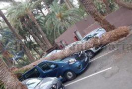 Sturm über Gran Canaria - Karneval ausgesetzt - Palmen umgeknickt - Flughafen wieder operativ
