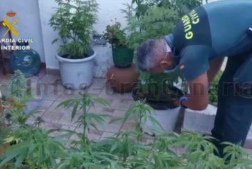 Marihuana-Plantage in San Mateo entdeckt - 2 Festnahmen
