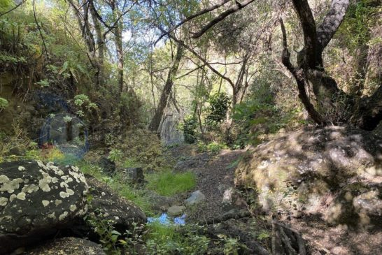 Barranco La Mina - Wasser im Wald