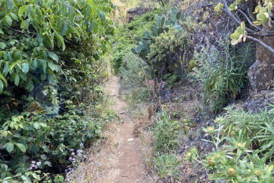 Barranco La Mina - einfache Wege