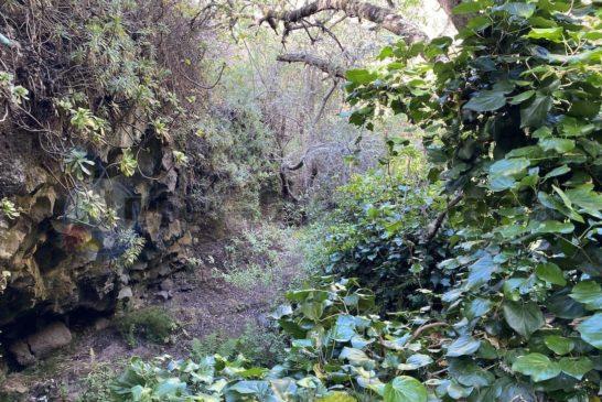 Barranco La Mina - stark bewaldet