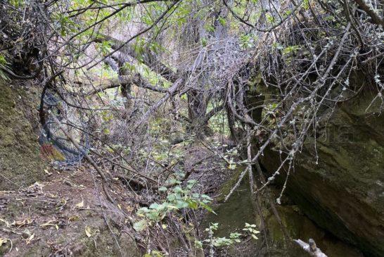 Barranco La Mina - verwildert und vertrocknet
