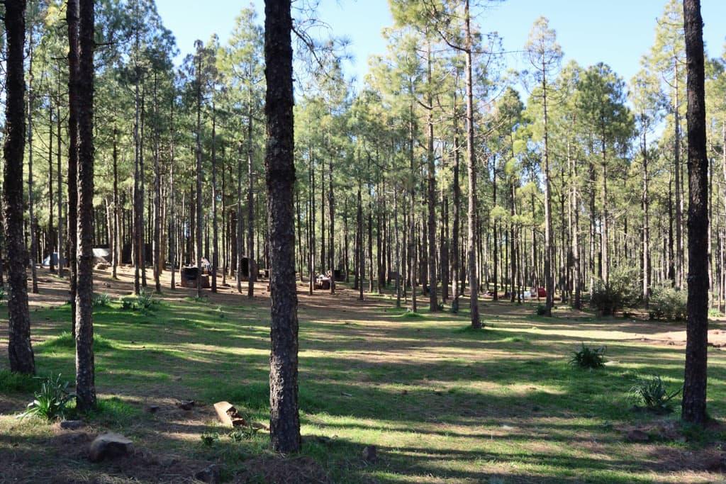 Campingplatz Llanos de la Pez