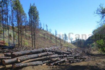 Waldbrandgebiet von 2019 - Aufforstung beginnt für knapp 1,5 MIO €