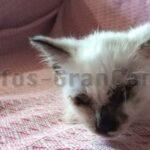 Tiermisshandlung in Telde: Katzenjunge die Augen ausgestochen & weggeworfen