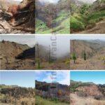 """So hat sich """"Zone 0"""" im letzten Jahr nach dem großen Waldbrand entwickelt"""