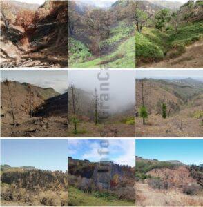 1 Jahr nach dem Feuer auf Gran Canaria
