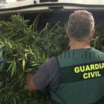 Drogenbande in Las Palmas zerschlagen – Plantage in Agüimes gefunden