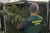 Drogenbande in Las Palmas zerschlagen - Plantage in Agüimes gefunden