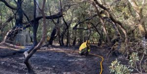Waldbrand La Gomera unter kontrolle