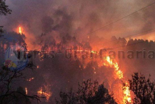 Waldbrand La Palma August 2020